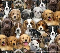 Fabric Adorable Pets 3800-Multi