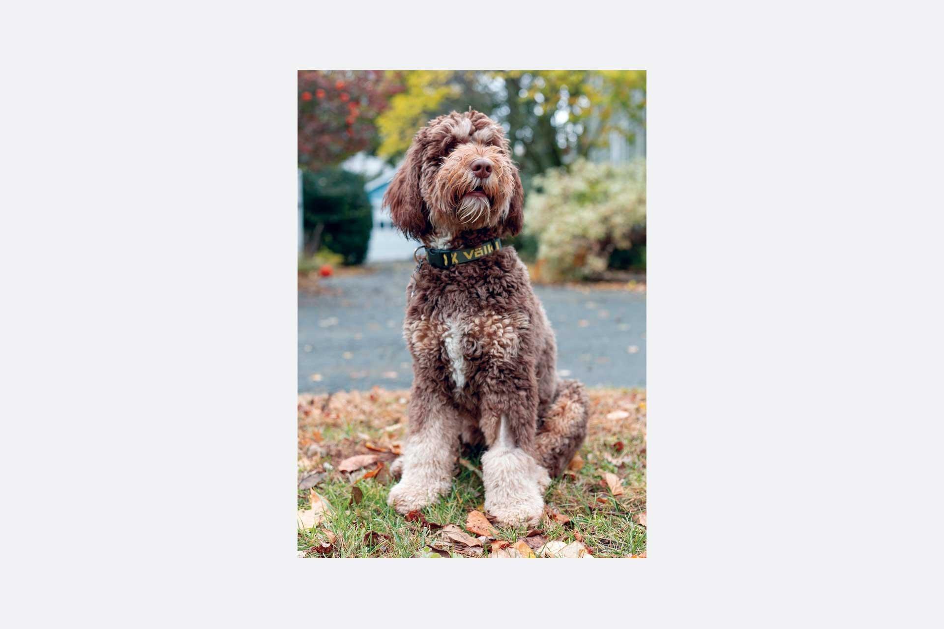 Volkl Dog Collar 2022