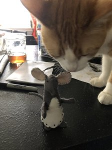Kitty and mouse