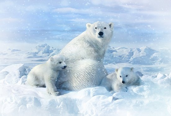 Call of the Wild Polar Bear Panel
