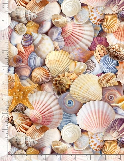 Beach - Assorted Packed Shells