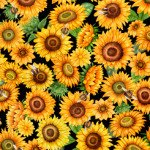Always Face The Sunshine PACKED SUNFLOWERS BLACK