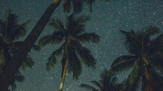 starry skies with palm