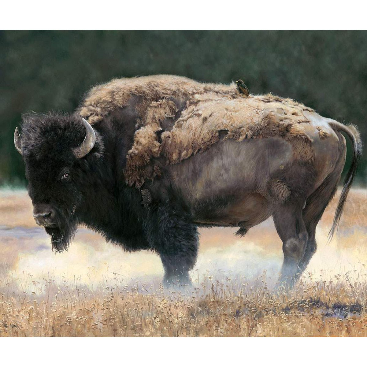 Wild & Playful Buffalo Panel