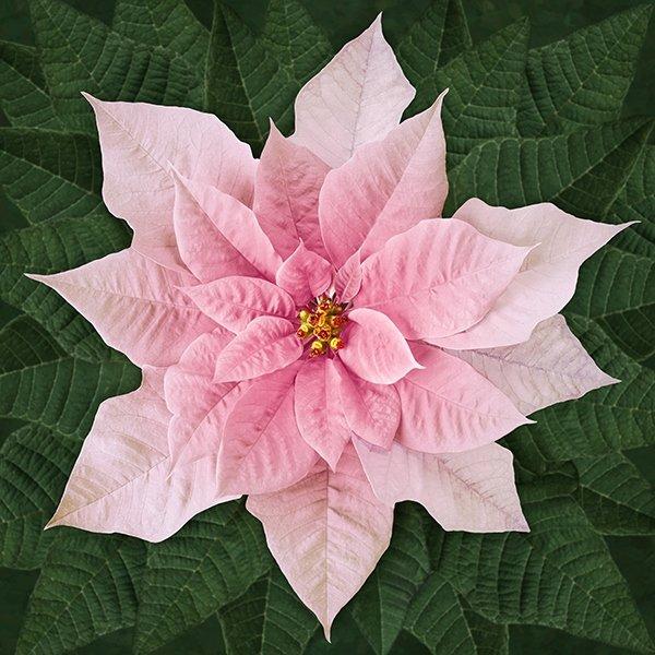 Dream Big Holiday Panel Pink