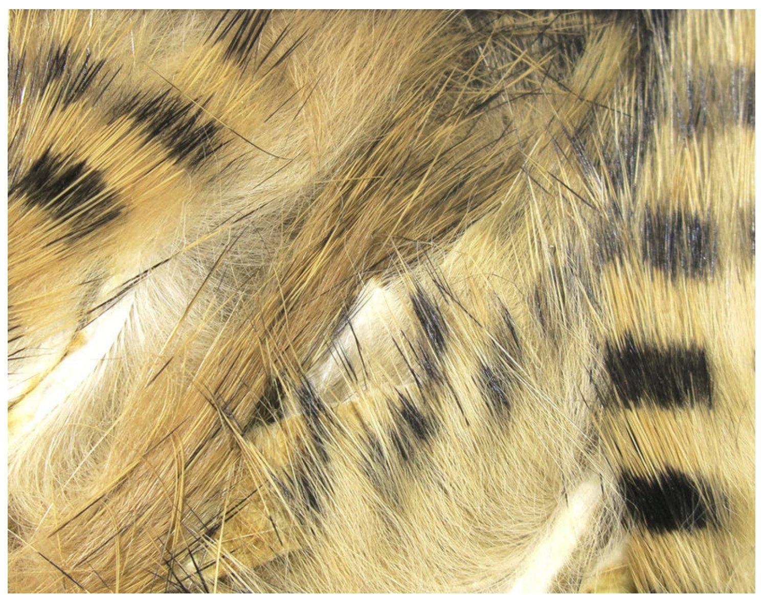 Black barred Magnum Rabbit Strips