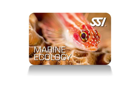 Marine Ecology/Underwater Naturalist