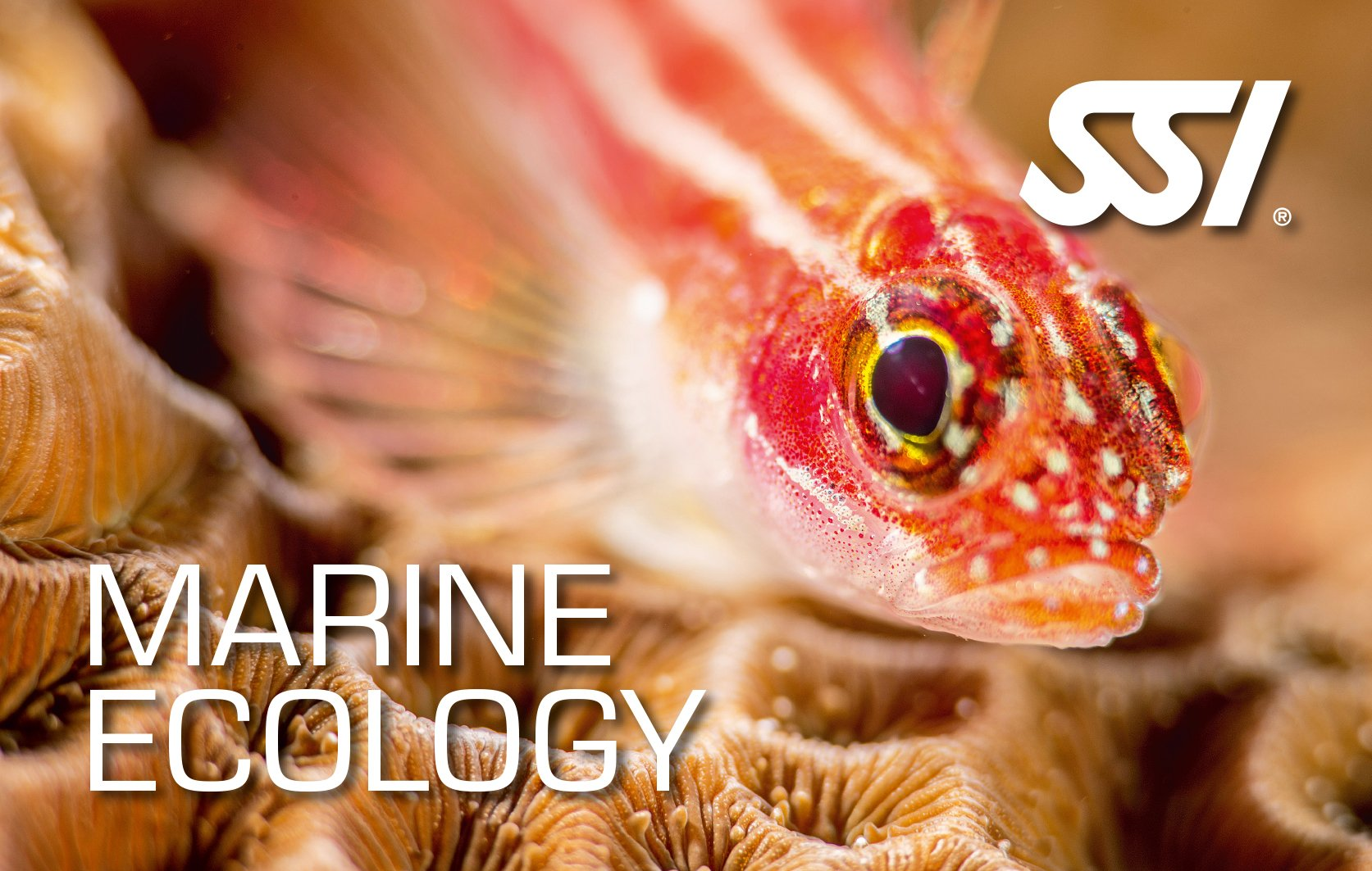 Virtual Marine Ecology/Underwater Naturalist Course