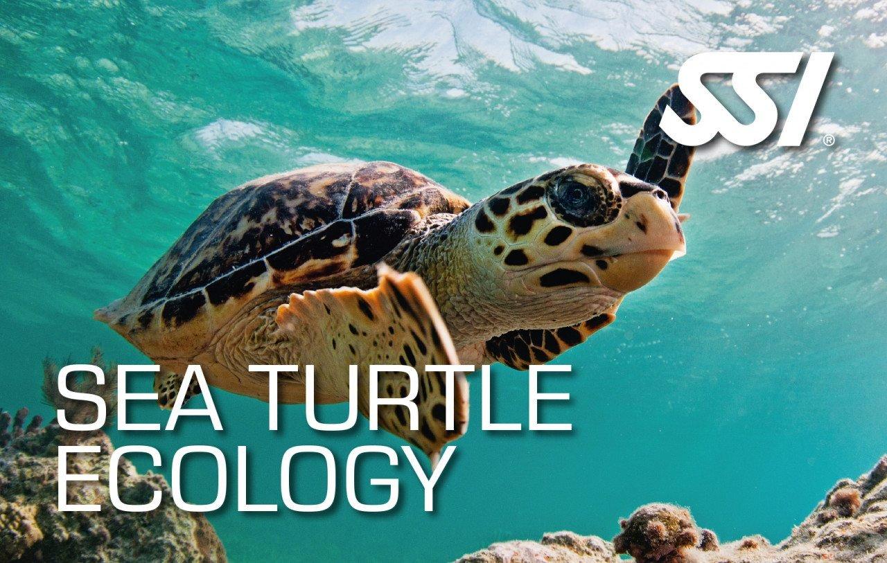 Virtual Sea Turtle Ecology Course