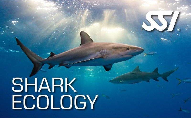 Virtual Shark Ecology Course