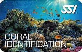 Virtual Coral Ecology Course