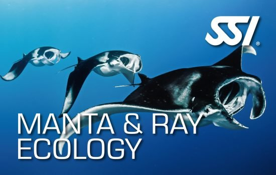 Virtual Manta & Ray Ecology Course