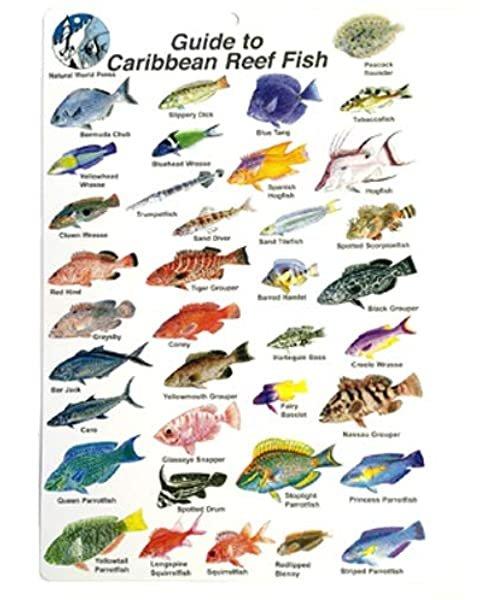 Trident- Caribbean Fish ID