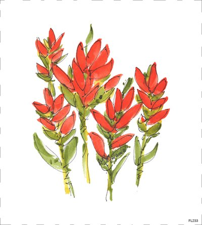 FL233 Indian Paintbrush Quilt block 9 x 9 , Red, green, and white flower, floral