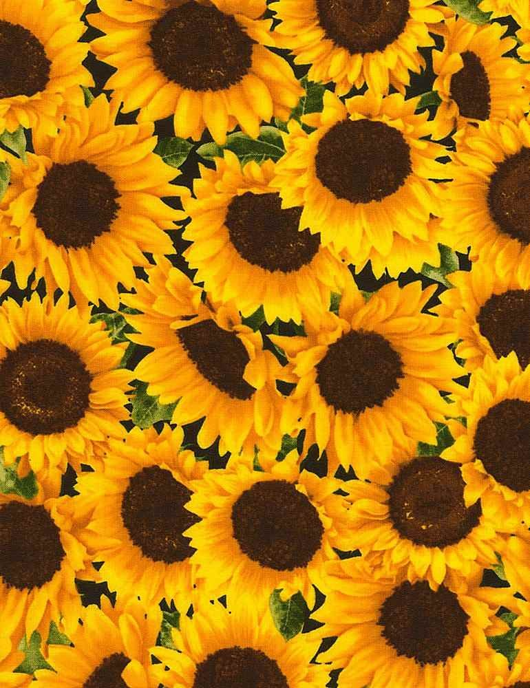 Packed Sunflowers