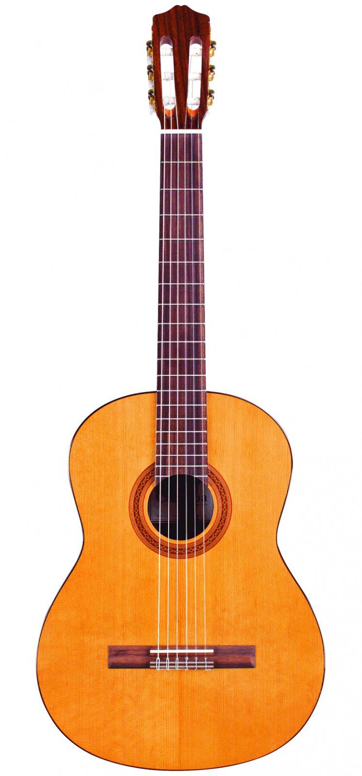 Guitar Rental Reservation & Deposit:  Protege Level