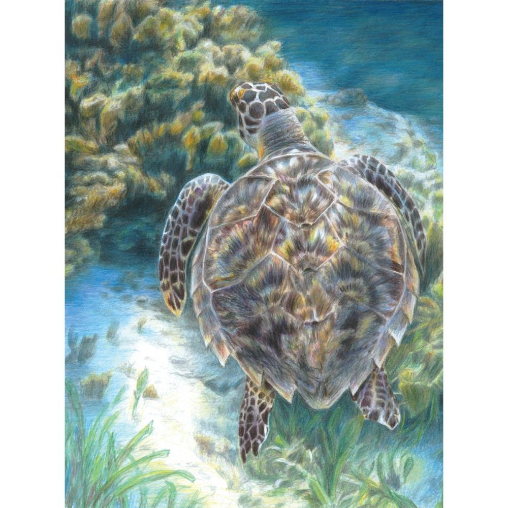 Colour by Pencil By Numbers- Sea Turtle