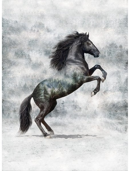 Call Of The Wild - Horse