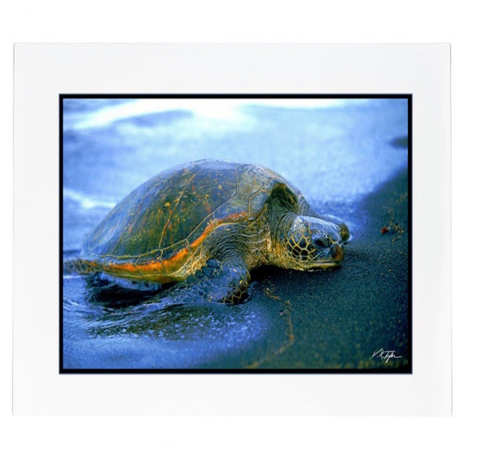 Photo > Sea Turtle on Black Sand Beach