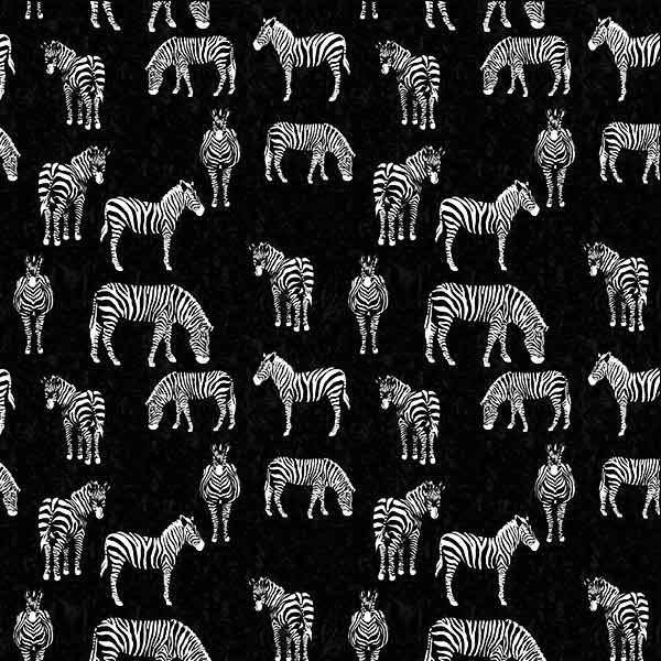 Black & Whites - Zebras on Black