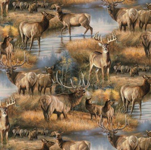 Deer + Elk in the Autumn