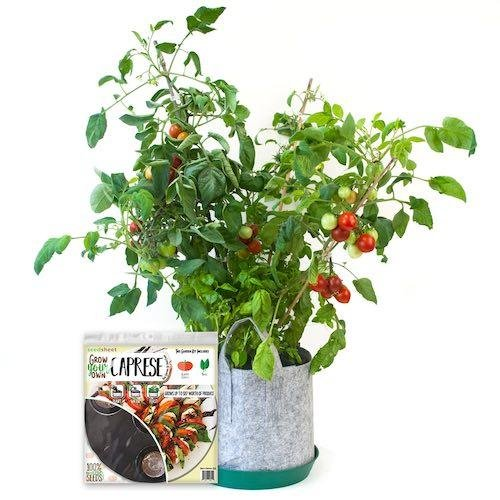 Seedsheet Garden Kit - Caprese