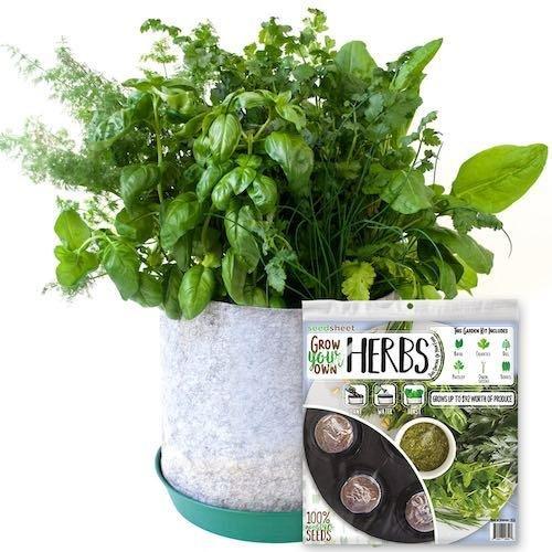Seedsheet Garden Kit - Herbs