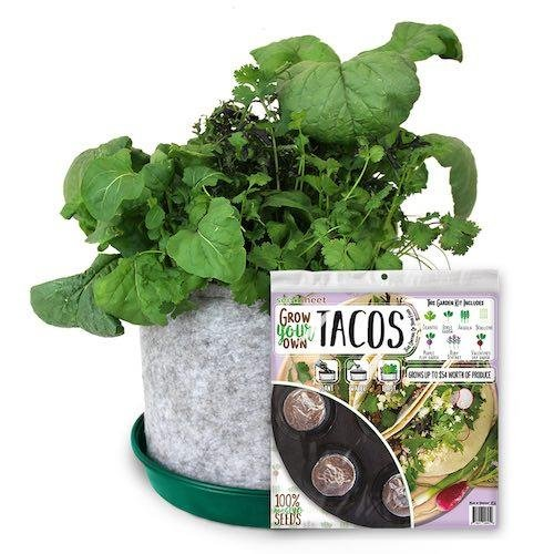 Seedsheet Garden Kit - Taco