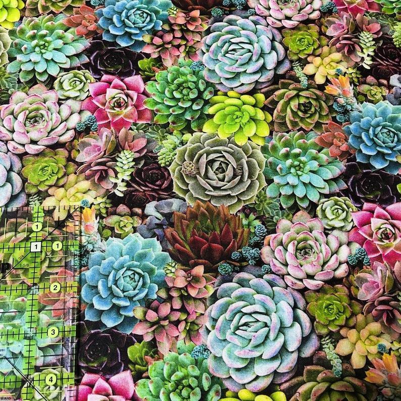 Multi Succulents