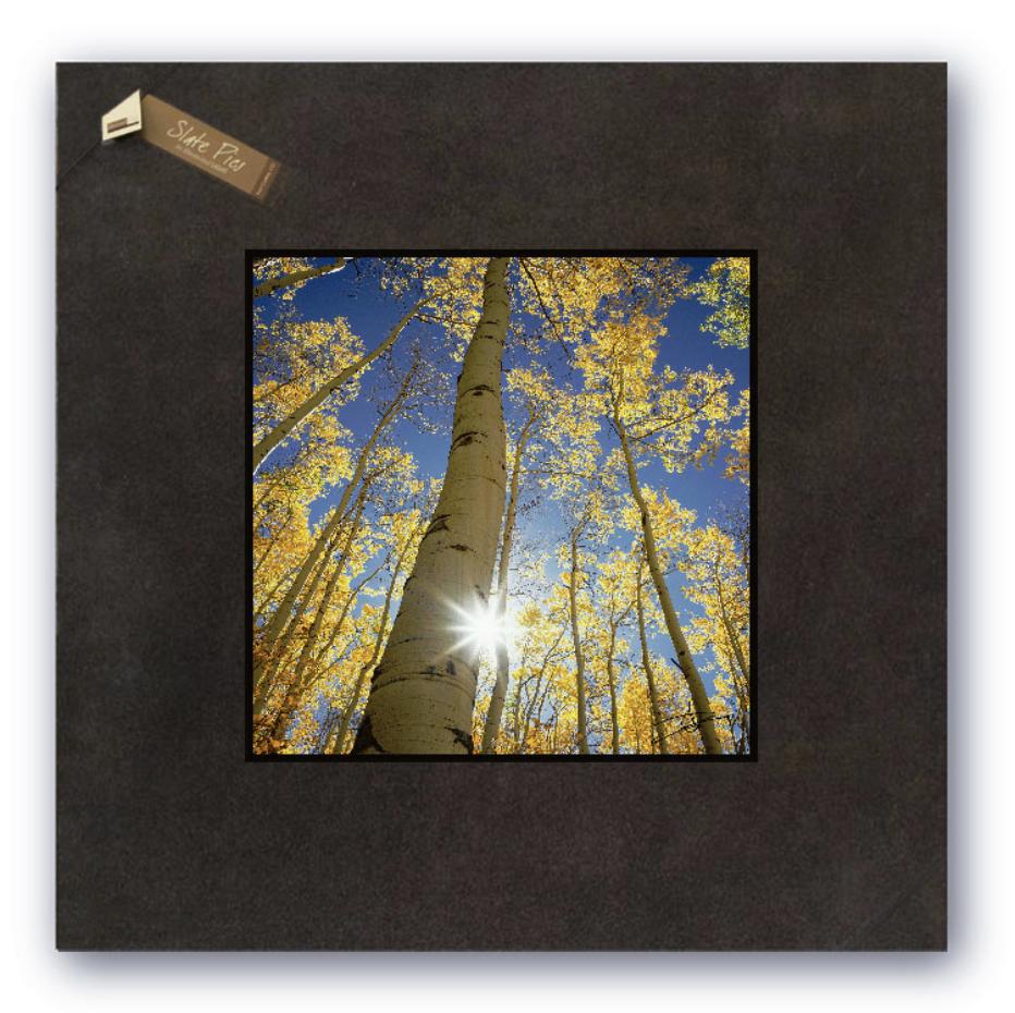 Illustrated Light Sunny Birch Wall Decor