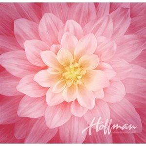 Dream Big -- 24389-94 Wild Rose