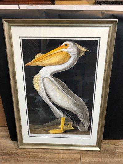 Audubon Pelikan Print framed