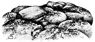 Boulders with Lichen Stamp