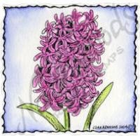 Hyacinth In Deckle Square Stamp