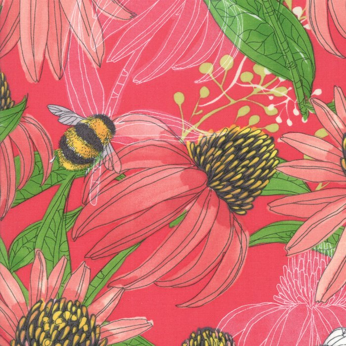 Painted Meadow Coneflower in Coral