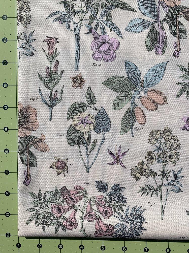 Botanica 2020 - Botanicals - Flowers on Cream