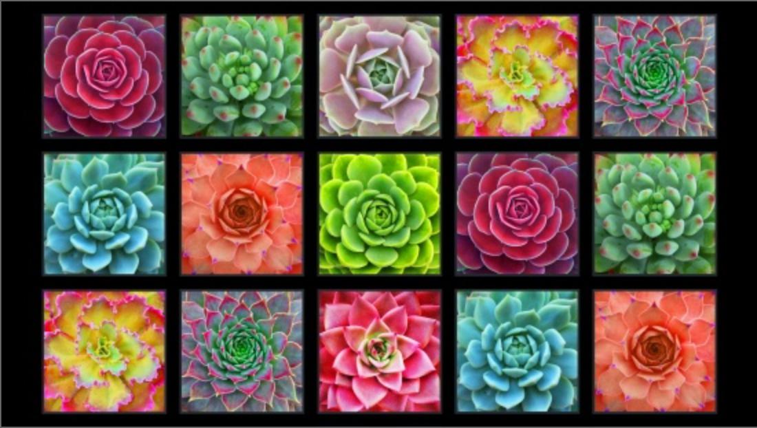 Succulents panel