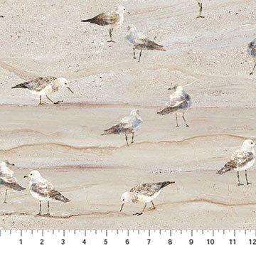 Swept Away Neutral Sea Gulls on Sand