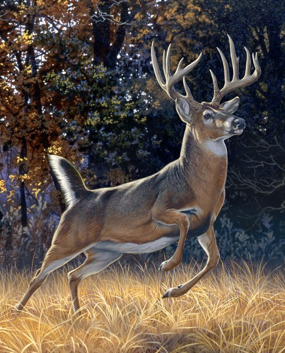 Startled Whitetail Buck 35 x 44 Deer Panel by Al Agnew / David Textiles