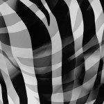 108 x 3YD Zebra Skins Black/White