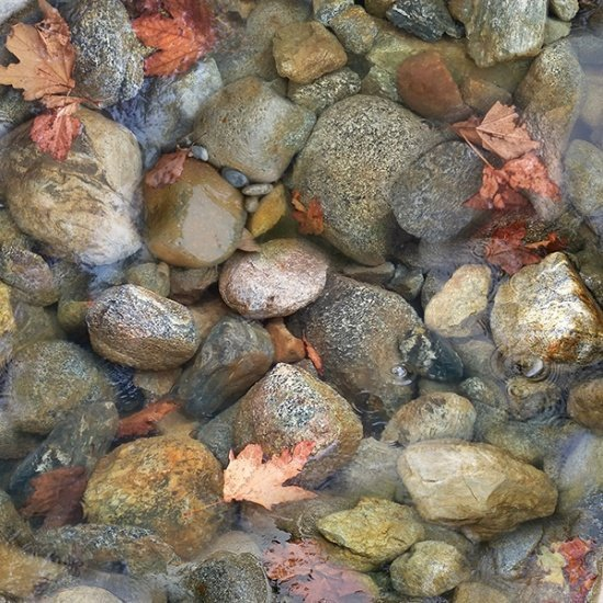 F-CB-HCA-CTW-03  Hoffman California-CTW - Call Of the Wild-03-Rusty - Streambed rocks & leaves