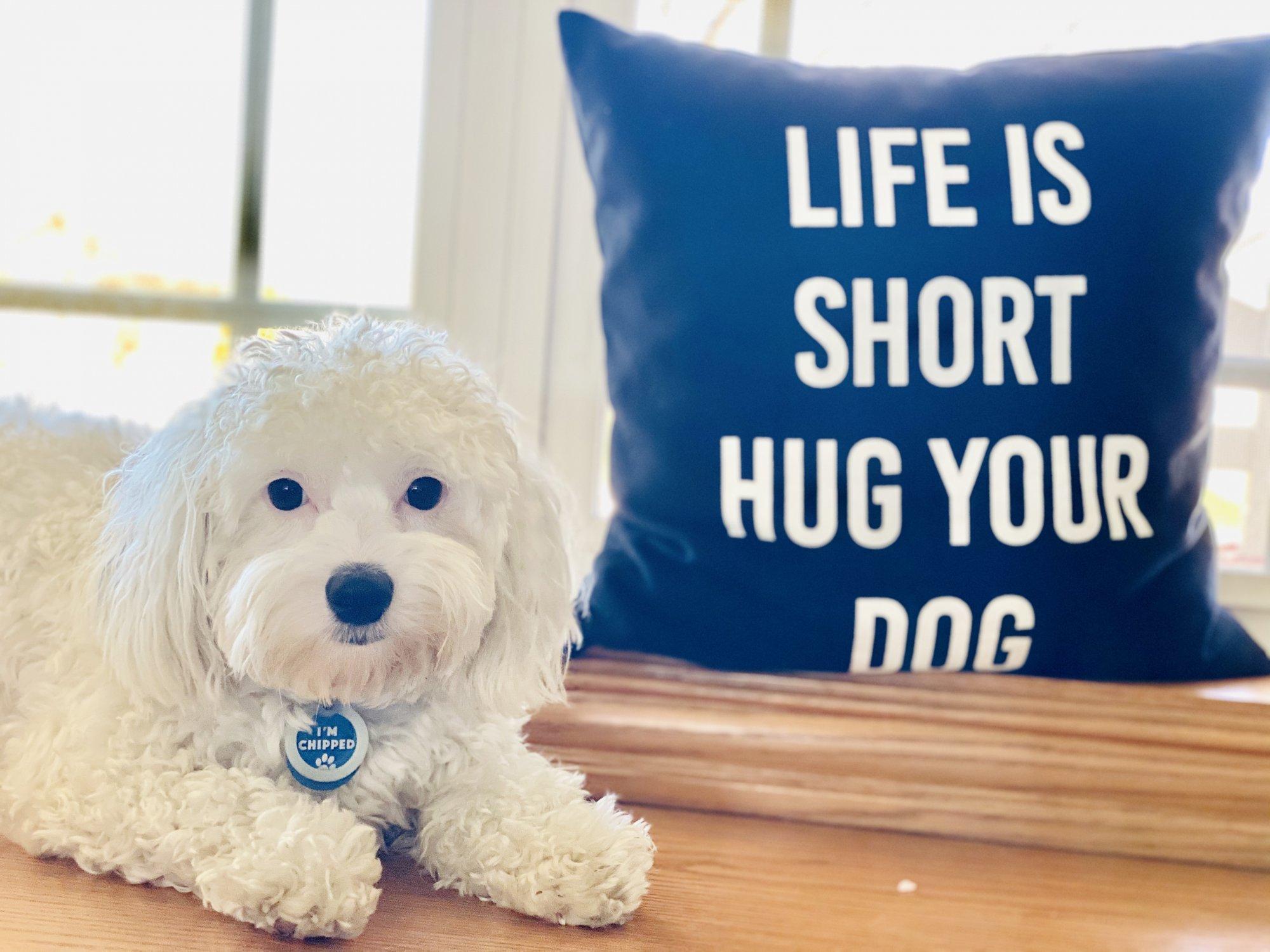 "Life is short hug your dog pillow 15""x15"""