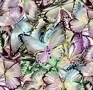 Nature Studies Digital