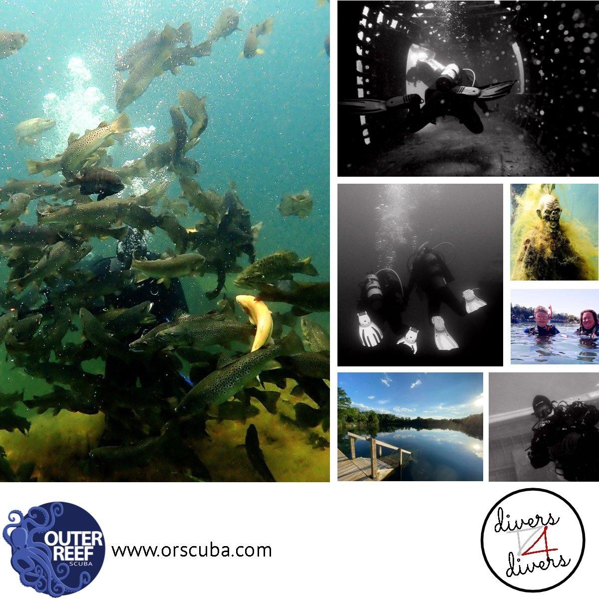 Diver4Divers 2021 Local Dive Events