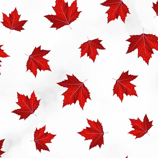CASS-DC4020 - GLORIOUS & FREE BY SHANIA SUNGA MAPLE LEAVES TOSSED RED WHITE -  ARRIVING IN APRIL 2021