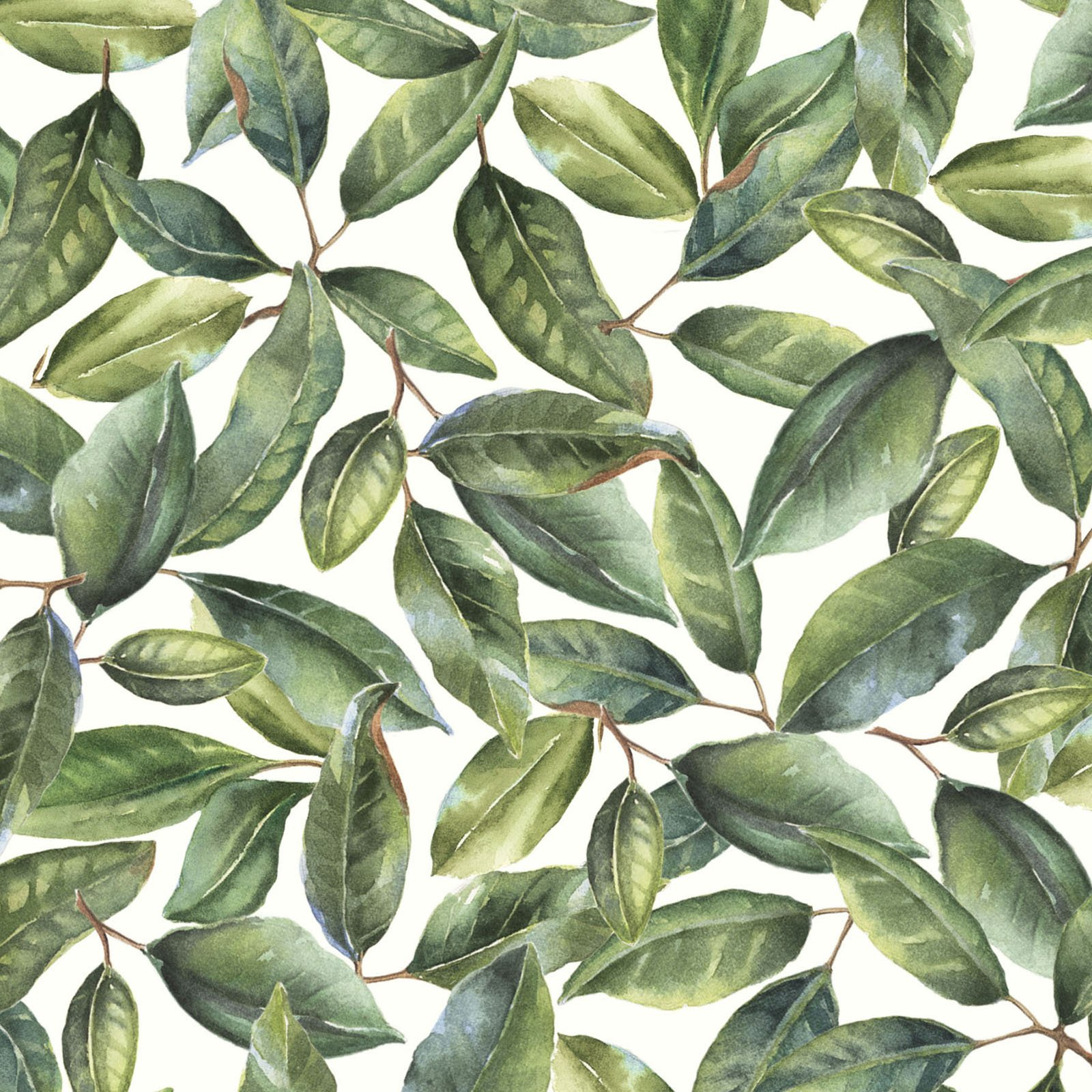 MAGN-4254 G - MAGNOLIAS BY SANDY CLOUGH LEAVES GREEN