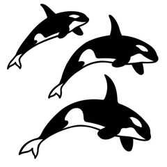 SHAN-LC009 - ORCA LASER CUTS BY SHANIA SUNGA 5&6.5&8/PK BLACK WHITE BA