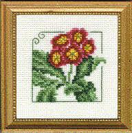 Auricula Carolyn's Garden Kit