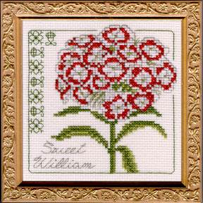 Sweet William Floral Elegance Kit