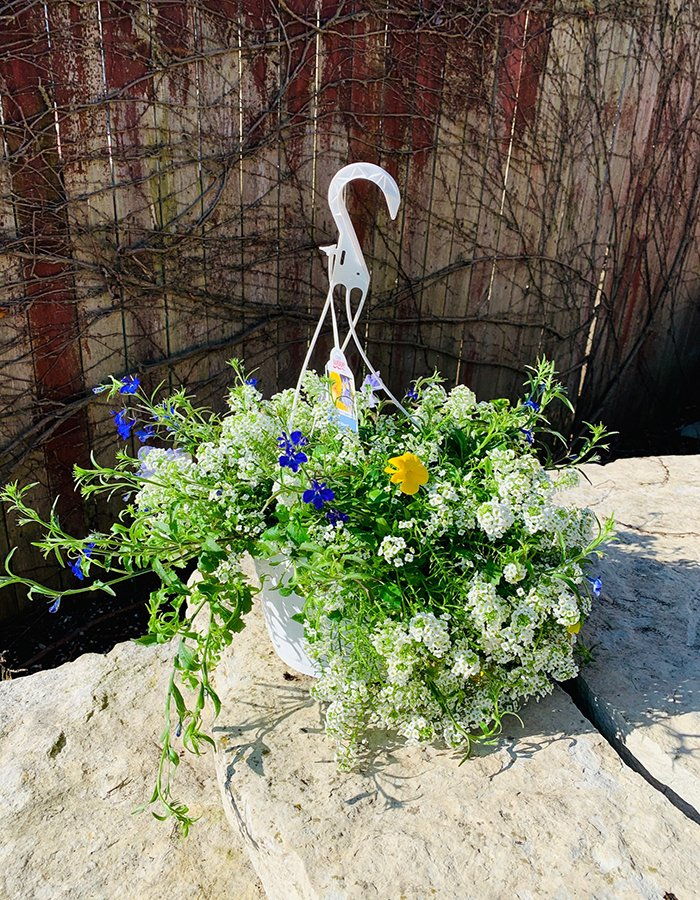 COOL WAVE HANGING BASKET